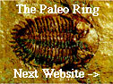 The Paleo Ring's Next Website